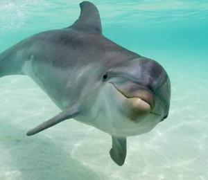 Puerto Vallarta Dolphin Programs