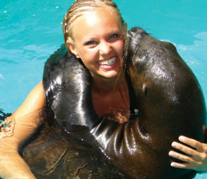 Sea Lion Programs