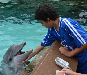 Private Dolphin Programs
