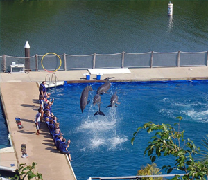 Vallarta Dolphin Center